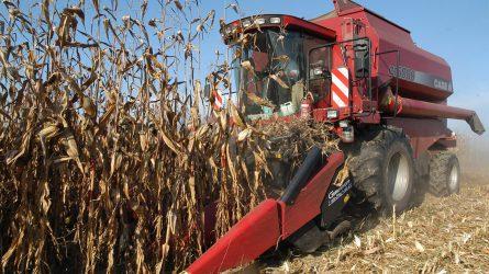 Több mint kilenc tonna a kukorica hektáronkénti termésátlaga Tolnában
