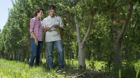 Ültetvények lombtrágyázásáról