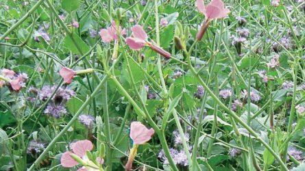 viterra: a köztesnövény-vetőmagkeverékek csúcsa