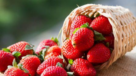 Május 20-ától piacon a magyar szabadföldi szamóca - A fagy miatt magas lesz az ára