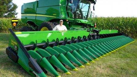 A sűrűsoros kukorica betakarítása
