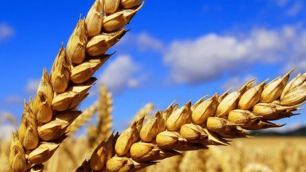 Nőtt a mezőgazdaság kibocsátása