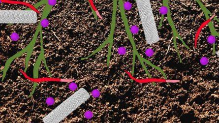 Vírus nanorészecskék a növényvédelem szolgálatában