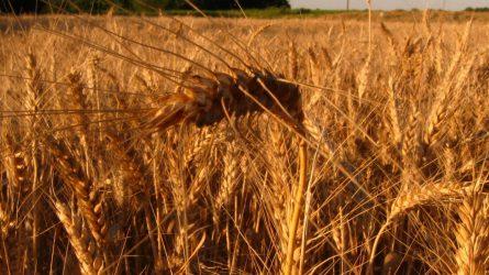 Az agrárvállalkozások nem használják ki a hatékonyságnövelés lehetőségeit