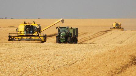 Megkezdődött az aratás az országban - Kevesebb lesz a betakarított termény