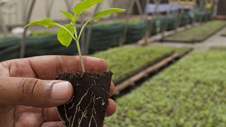 Biogazdálkodás: mi gátolja a fejlődést?