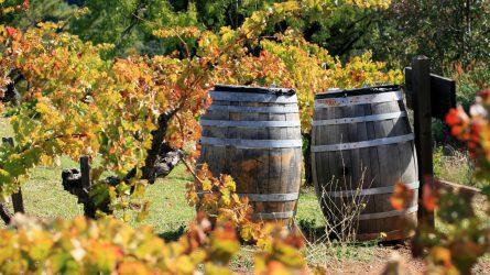 A kén-dioxid szerepe a borászati technológiában, különös tekintettel a kombinált alkalmazásra