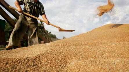 Rekordot döntött az ukrán gabonaexport