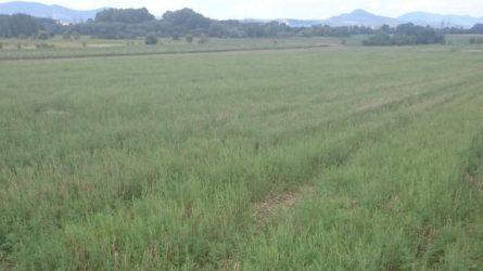 Növényvédelmi előrejelzés: Nyár végén sincsen komoly veszély a szántókon, gyümölcsösökben