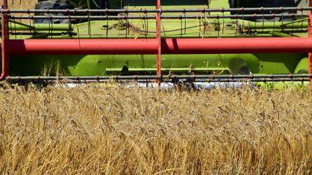 A szovjet idők rekordjánál is nagyobb gabonatermést vár Oroszország