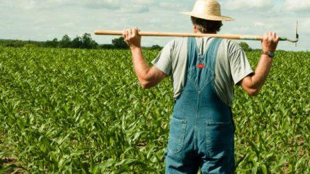 Nőtt a mezőgazdaságban a feketefoglalkoztatás