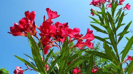 Ne kockáztassuk a növényi károsítók behozatalát!