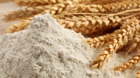 A gombatoxinok veszélyei - Magánszemélyek is bevizsgáltathatják a gabonát vagy a lisztet
