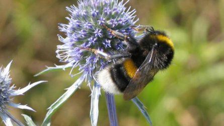 Valóban károsak lehetnek a méhekre a neonikotinoid növényvédő szerek