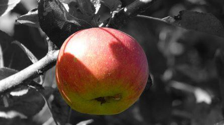 Oroszrulett: a szerb zöldség- és gyümölcsexport egy része az EU-ból származik