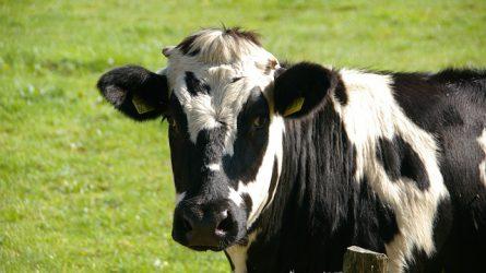Fontos szerepük van az állattenyésztőknek az agrárium húzóágazattá válásában
