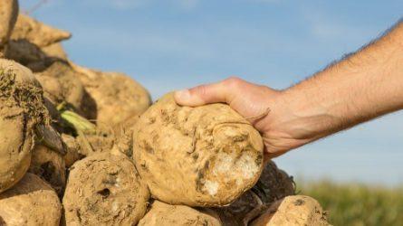 Szeptember 30. - A fél évszázados cukorkvóta megszűnésének napja