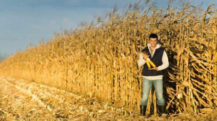 Kötelező képzés indul a nyertes fiatal gazdák számára