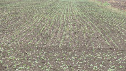 Növényvédelmi előrejelzés: Mit hoz az esős ősz?
