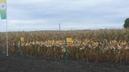 Először tartott Magyarországon kukorica-bemutatót a Bc Intézet