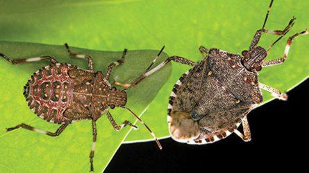 Támadnak a bogarak