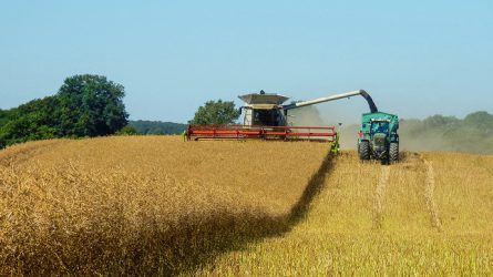 RAPOOL-hibridrepcék terméstanúsítása a Magyar Kukorica Klub mérései alapján (FRISS EREDMÉNYEK+VIDEÓ)