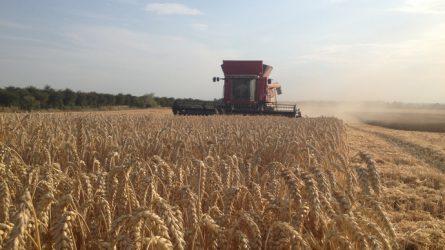 SAATEN-UNION hibridbúzák terméstanúsítása a Magyar Kukorica Klub mérései alapján (FRISS EREDMÉNYEK+VIDEÓ+MOBILAPP!)