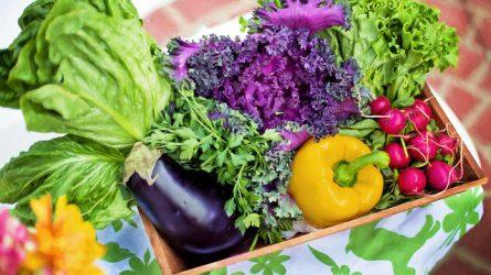 5-10 százalékkal több lehet az idei zöldségtermés a tavalyinál