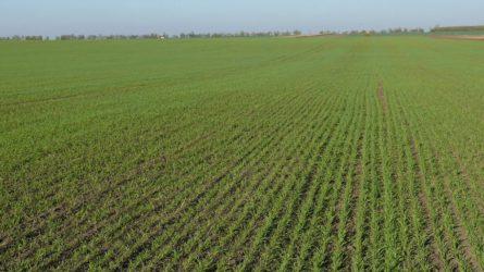 Növényvédelmi előrejelzés: Lassan zárul a szezon, de még van mit tenni a földeken, ültetvényekben
