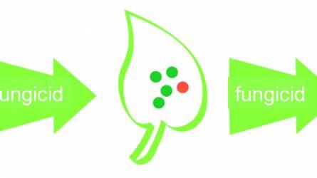 A fungicid-rezisztencia jelentősége