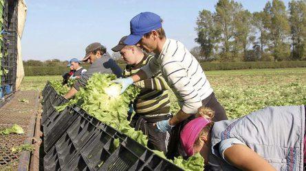 Győrffy: Emeljék meg a mezőgazdasági idénymunkások adómentes napi jövedelmét!