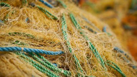 Változások a halgazdálkodási és halvédelmi bírság szabályozásában