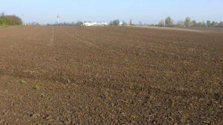 Növényvédelmi előrejelzés: A vetések szemlézése, az ültetvényekben a lemosó permetezés a feladat