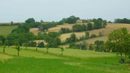 Az agrár-erdészetről dióhéjban