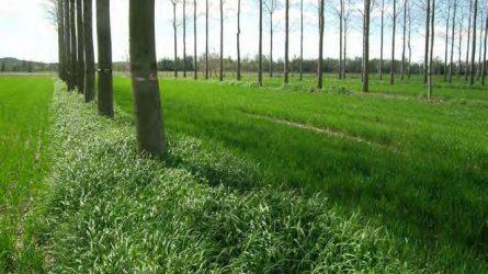 Agrár-erdészeti rendszerek a klímaváltozás mérséklésének szolgálatában
