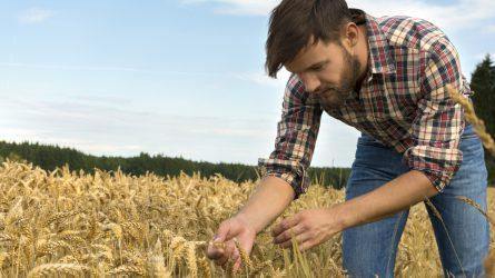 A magyar mezőgazdaság szempontjából is fontos a magas színvonalú szakképzés