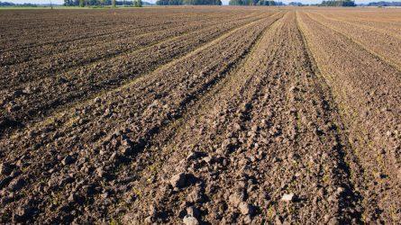 Jelentősen megugrott a mezőgazdasági termőföld ára