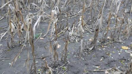 Növényvédelmi előrejelzés: Vége a növényvédelmi szezonnak