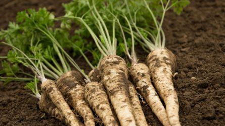Őszi talajelőkészítés aprómagvú zöldségfélék esetében