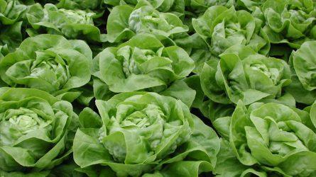 A zöldségfélék tél alá vetéséről