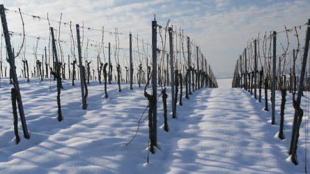 Agrometeorológia: beköszönt a tél