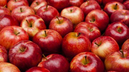 Rekordszinten vannak az ukrán almakészletek