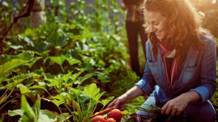 Mintaprogram készül a fóliás kertészeti kultúra fejlesztésére