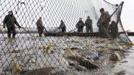Csökken a hal és a sertésbelsőség áfája 2018-ban