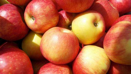 Veszélyben a Honeycrisp alma