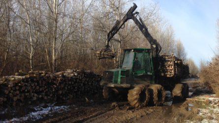 Árad a Tisza, mentik a fát az erdőgazdálkodók