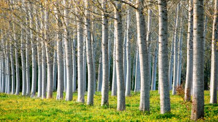 Fás szárú ültetvények és agrár-erdészeti rendszerek támogatásai a vidékfejlesztés érdekében