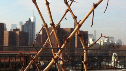 Rooftop Reds, avagy borszőlő a tetőn - Tudósítás Brooklynból