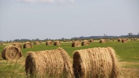 Közös nyilatkozatot fogadtak el az új agrárpolitikáról a V4-ek és Horvátország agrárminiszterei