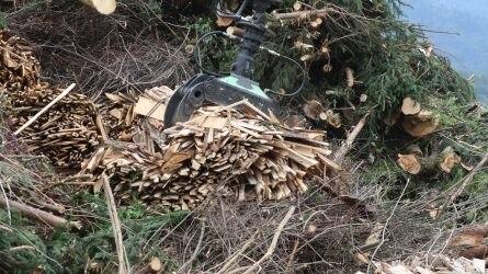 Magyarul is olvasható a biomassza-alapú gazdaság alapjairól szóló tájékoztató